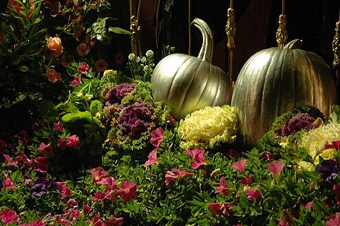 Cinderella's Silver Halloween PUMPKINS in a Bed of Pink Flowers and decorative cabbage, Roses, brass bed frame, Mill Rose Inn, Half Moon Bay, California, USA from Flickr via Wylio