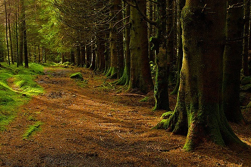 Forest above Crafnant from Flickr via Wylio