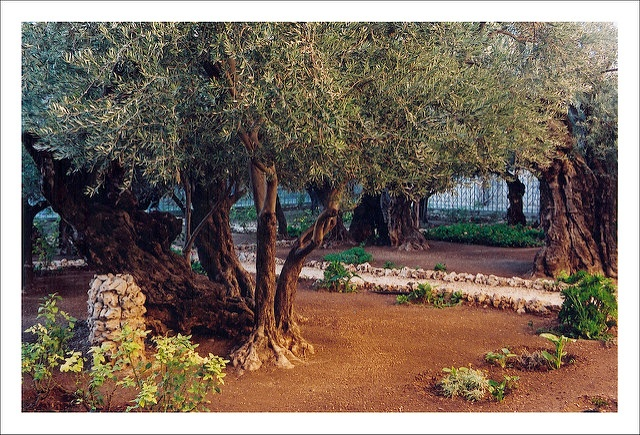 A Time for Resolve: The Garden of Gethsemane and the Lord's Prayer